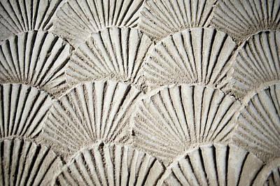 Photograph - Texture Sea Shells by Derek Winchester
