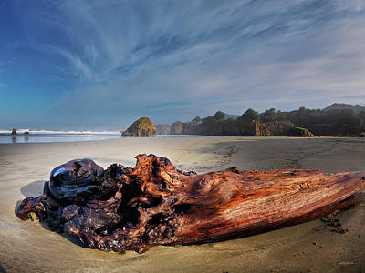 Photograph - Textured Driftwood by Leland D Howard