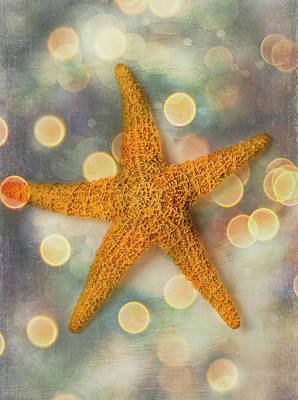 Photograph - Textured Sea Star by Garry Gay