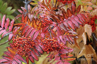 Photograph - Textures And Colors Of Autumn by Carol Groenen