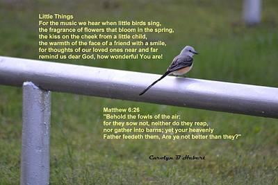 Wall Art - Photograph - Little Things Prayer - Scissor-tail Flycatcher by Carolyn Hebert