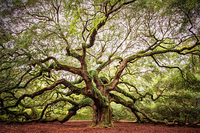Photograph - The Angel Oak by Phyllis Burchett
