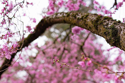 Photograph - The Arc Of Spring by Kunal Mehra