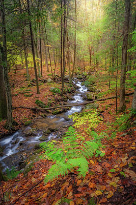 Photograph - The Autumn Forest by Bill Wakeley