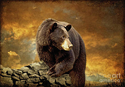 Animals Photos - The Bear Went Over The Mountain by Lois Bryan