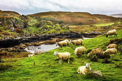 Photograph - The Beautiful Isle Of Kerrera by Debra and Dave Vanderlaan
