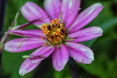 Photograph - The Beautiful Purple by Thomas Vasas