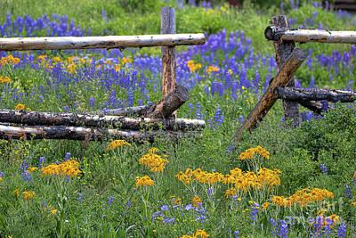 Photograph - The Beautiful Way by Jim Garrison