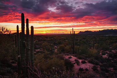 Photograph - The Beauty Of Desert Winter Skies  by Saija Lehtonen