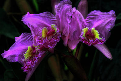 Photograph - The Beauty Of Orchids by Debra and Dave Vanderlaan