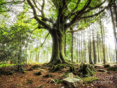 The Beech Of Ponthus And Sidoine Art Print