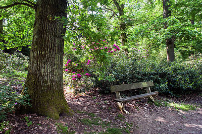 Photograph - The Bench In Spring Forest by Jenny Rainbow