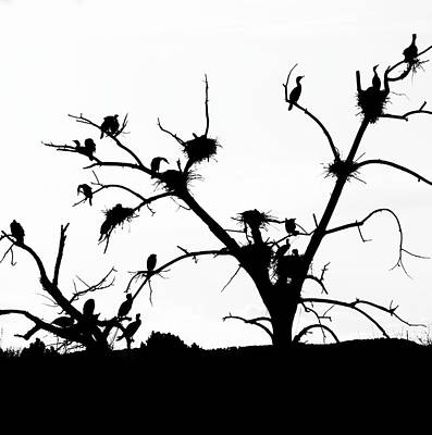 Photograph - The Birds by Kevin Schwalbe