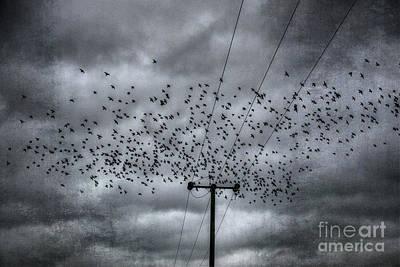 Digital Art - The Birds by Nigel Bangert