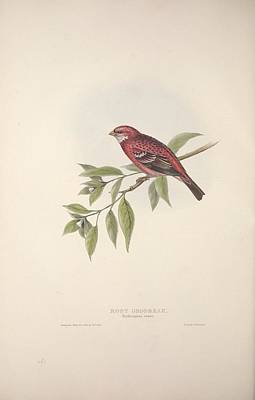 Animals Royalty-Free and Rights-Managed Images - The birds of Europe, London,Printed by R. and J.E. Taylor, pub. by the author,1837 - 089 by R and J E Taylor