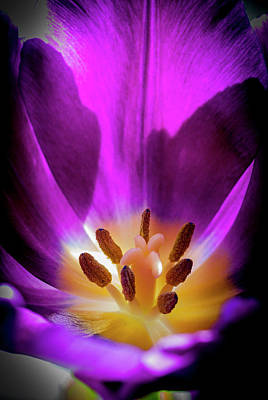 Photograph - The Bloom Within by Robert Potts