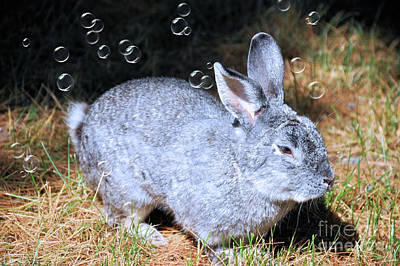 Photograph - The Bunny And Bubbles by Elaine Manley