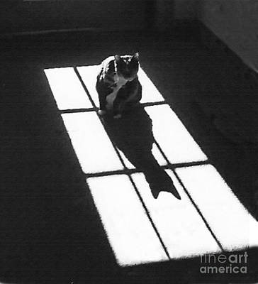 Anchor Down Royalty Free Images - The Cat and the Shadow 300 Royalty-Free Image by Sharon Williams Eng