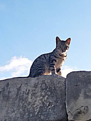Photograph - The Cat by Lucia Sirna