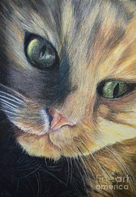 Drawing - The Cat Mikey by Maria Arias