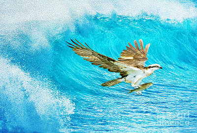 Ospreys Wall Art - Photograph - The Catch by Laura D Young