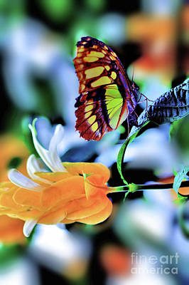 Photograph - The Charm Of A Butterfly by Elaine Manley