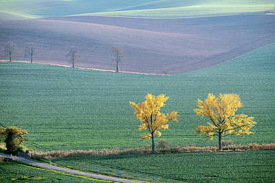 Photograph - The Chestnuts Way, Moravia 15 by Dubi Roman