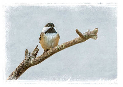 Photograph - The Chicadee by Cathy Kovarik