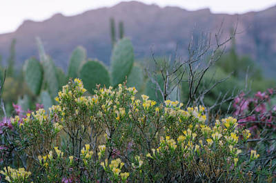 Photograph - The Colorful Desert by Margaret Pitcher