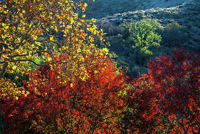Photograph - The Colors Of A Beautiful Fall by Lynn Bauer