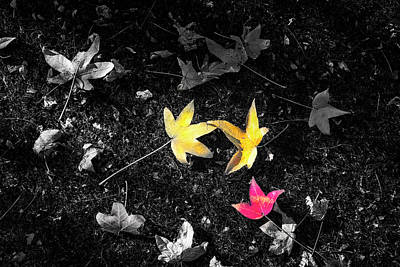 Photograph - The Colors Of Autumn by Joseph S Giacalone