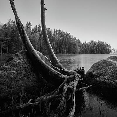 Jouko Lehto Royalty-Free and Rights-Managed Images - The coming winter in bw by Jouko Lehto