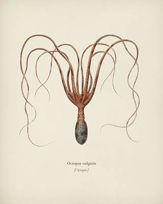 Aloha For Days - The common octopus  Octopus vulgaris  illustrat Celesed by Charles Dessalines D  Orbigny  1806 1876  by Celestial Images