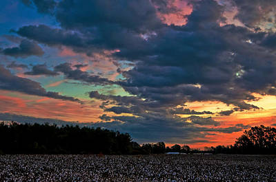 Photograph - The Cotton Field  by John Harding