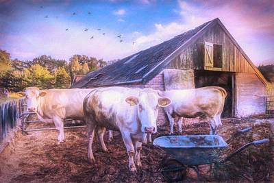 Photograph - The Cows Came Home Watercolor Painting by Debra and Dave Vanderlaan