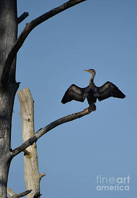 Photograph - The Cross Of The Cormorant by Skip Willits