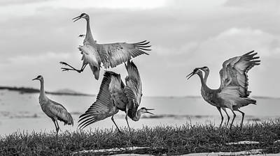 Photograph - The Dance  by Kevin Dietrich