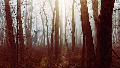 Photograph - The Deer In The Fog By Joni Eskridge by Joni Eskridge