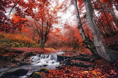 Photograph - The Delights Of Late Autumn by Vlad Sokolovsky