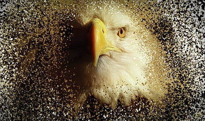 Photograph - The Eagle by Elie Wolf