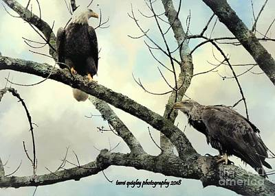 Photograph - The Eagles Have Landed  by Tami Quigley