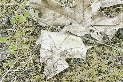 Photograph - The Early Fall Frost by Thomas Vasas