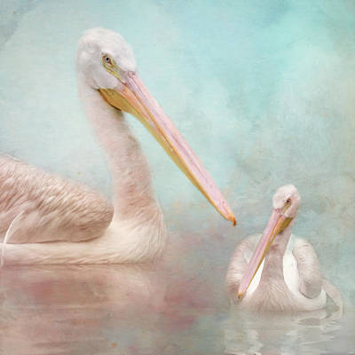 Photograph - The Elegant White Pelican by Jai Johnson