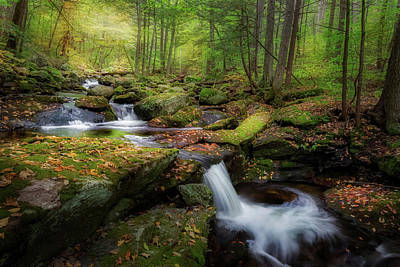 Photograph - The Ethereal Forest by Bill Wakeley