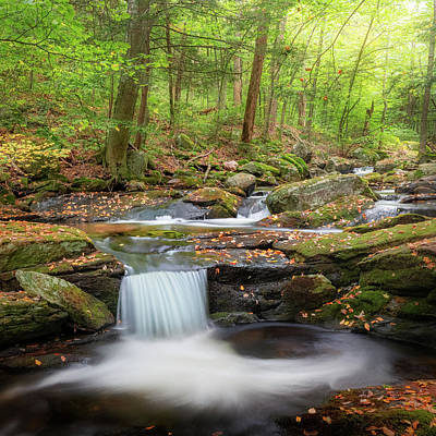 Photograph - The Ethereal Forest Square by Bill Wakeley