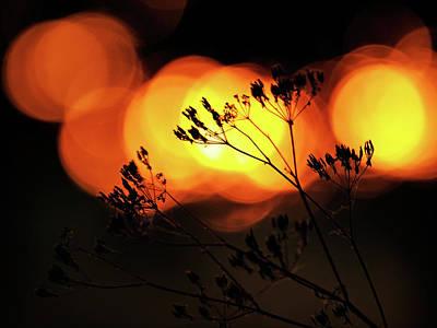 Photograph - The Evening Light 1 by Jorg Becker