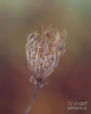 Photograph - The Exquisite Handiwork Of Nature by Kerri Farley