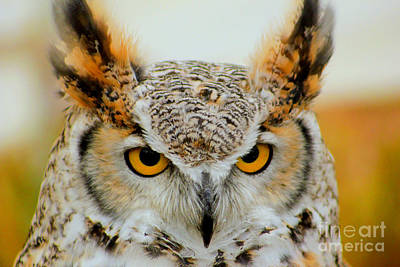Photograph - The Eyes Have It by Sheila Skogen