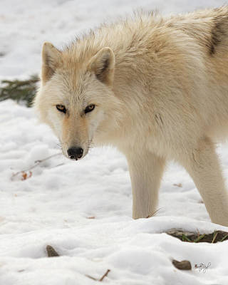 Animals Photos - The Eyes of a Wolf by Everet Regal