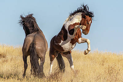 Photograph - The Fight Is On by Mary Hone